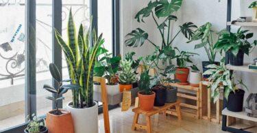 Why Indoor Gardening is Great